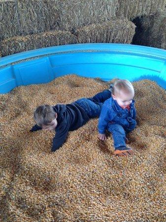 Kyker Farms Corn Maze: corn tubs!