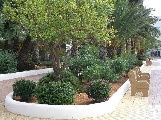 Tropic Garden Aparthotel : Lovely gardens along the front.