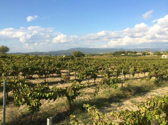 view across Domaine Faverot Vines