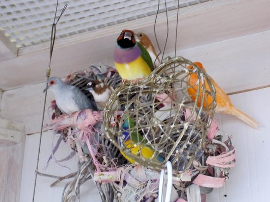 Mansion District Inn Bed & Breakfast: Jovanna's pretty birds