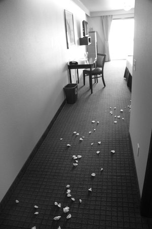 Inn at Nye Beach : Rose petals leading your way to the room
