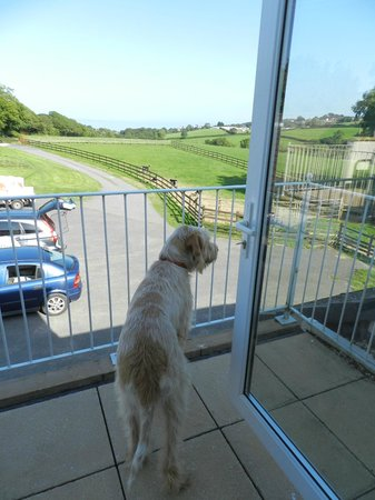 Moreton House: View from the balcony, the dogs loved it!