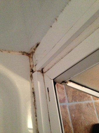 Parkdean - St Minver Holiday Park: Moldy shower