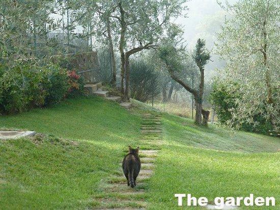 B&B Poggio del Drago: Emanuele's cat in the garden