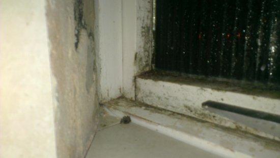 Riverside Hotel: dead spider and damp window