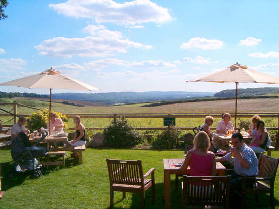 The Stag: our sunny garden
