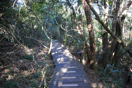 The Phantom Forest Eco-Reserve : Boardwalk
