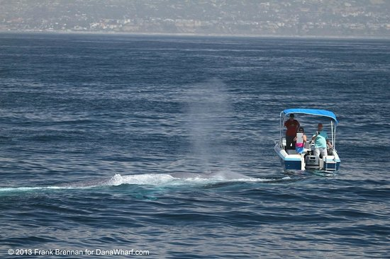 Dana Point, CA: Blue Whale