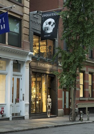 The Evolution Store: Our Store on Spring Street