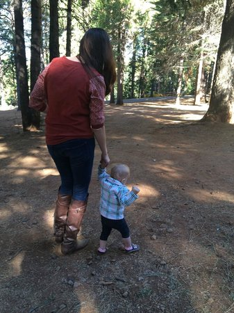High Hill Ranch: walking among the trees.