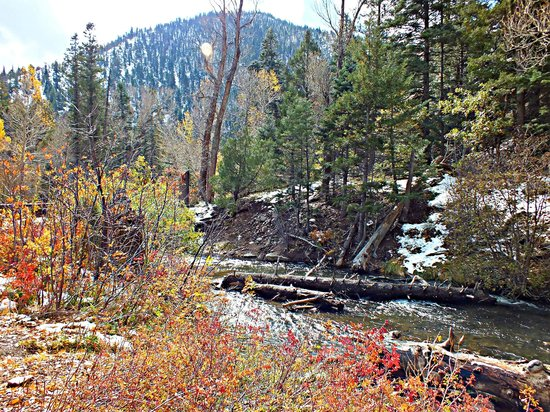 Cimarron Canyon State Park: The beaver pond along Clear Creek Trail.