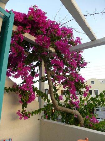 Nissia Apartments : Balcony