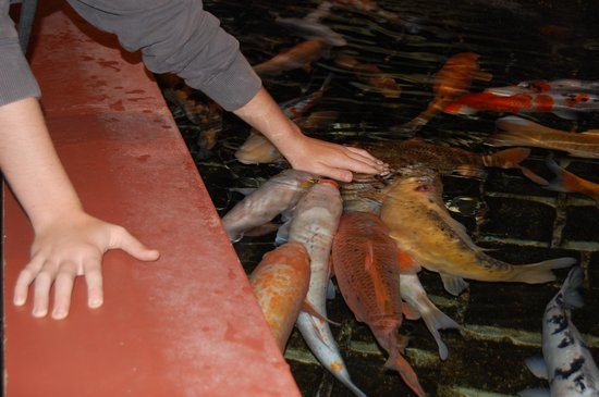 Grand Aquarium de Touraine: Caresses aquatiques