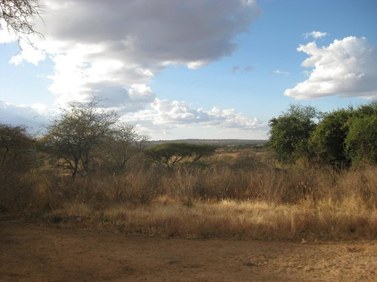 Oliver's Camp, Asilia Africa: View from our private deck.