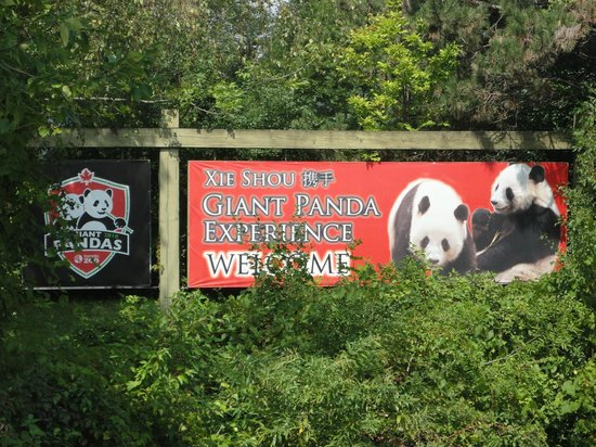Toronto Zoo: PANDAS 2013
