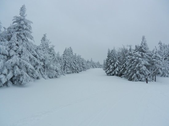 Mount Snow Resort: ungroomed
