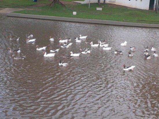 Balneario Municipal De Aguas De Lindoia: praça ademar de barros