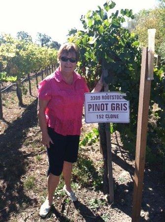 J Vineyards & Winery: Pinot Gris vines