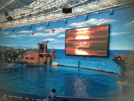 Ji Di Guan - Pole Aquarium.: Dolphin Show Arena