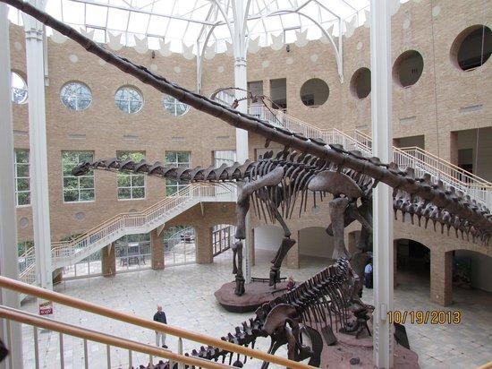 Fernbank Museum of Natural History: Huge