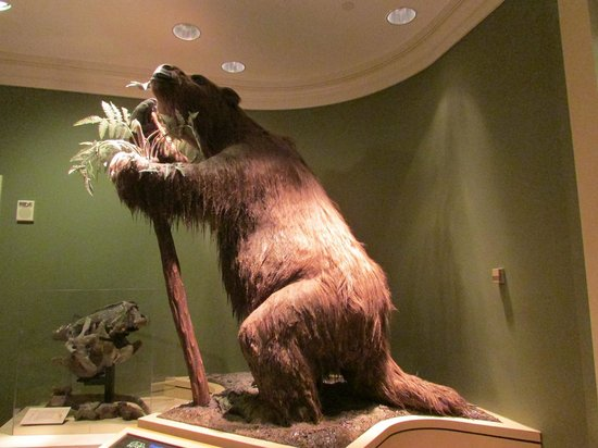 Fernbank Museum of Natural History: Sloth!