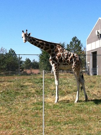 Rolling Hills Zoo: Close to animals