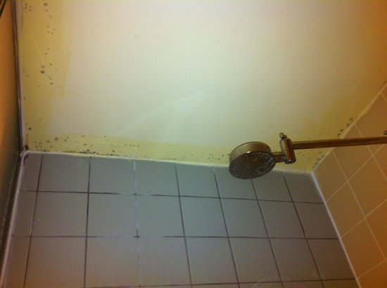 The Time New York: Mold on ceiling in shower