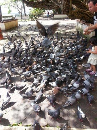 Calle del Cristo: Pigeons