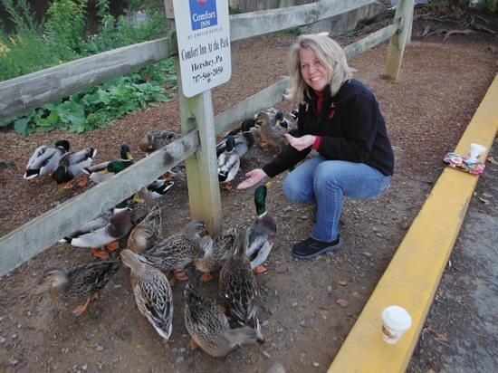 Comfort Inn at the Park: Duck feeding time.