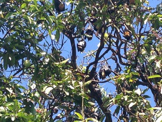 DoubleTree by Hilton Hotel Cairns: more bats! love those bats