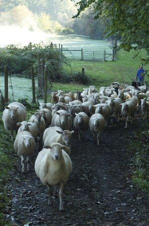 Leaping Lamb Farm: The lambs