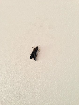 Mantra Parramatta: The moth on the wall that housekeeping missed for a week.