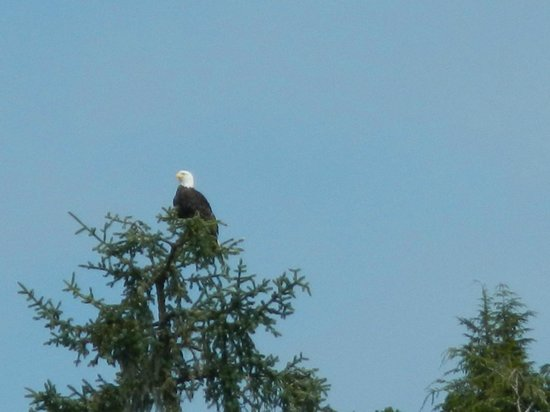 Stubbs Island Whale Watching: Eagles and nests were abundant viewing