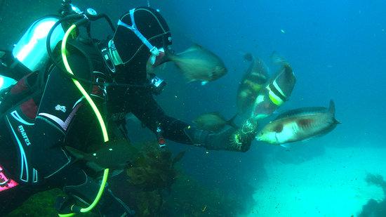 Tairua Dive and Marine: Feeding the Fish