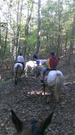Valley View Cabins: Horseback riding