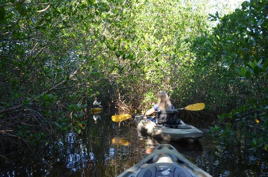 Kayak Charters : Going through the mangrove tunnels