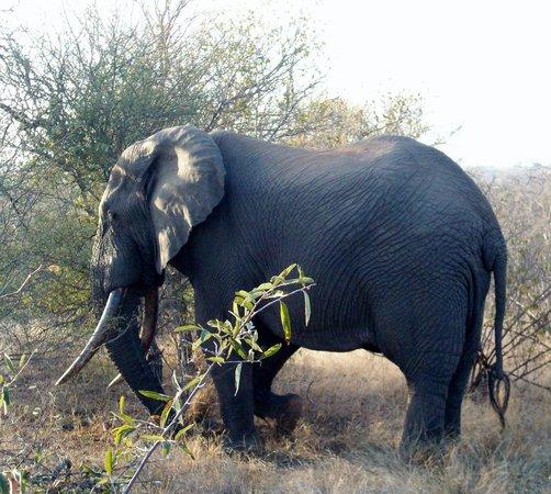 "Toro Yaka Bush Lodge: Ezulwini - the ""Big Boy of the Reserve"""