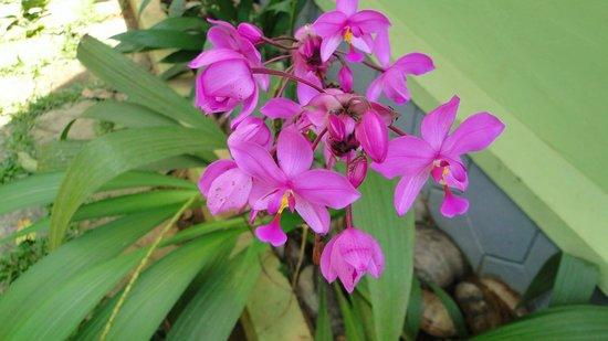Wayanad Blooms: views