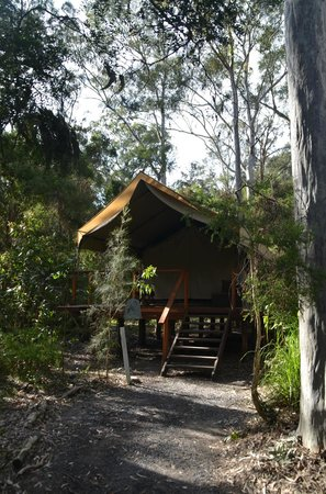 Paperbark Camp: Our cabin