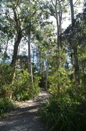 Paperbark Camp: Room surrounds