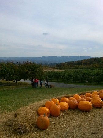 Lawrence Farms Orchards: View from the farm store