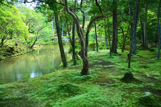 The Ultimate Moss Garden Review Of Saihoji Temple Kyoto Japan