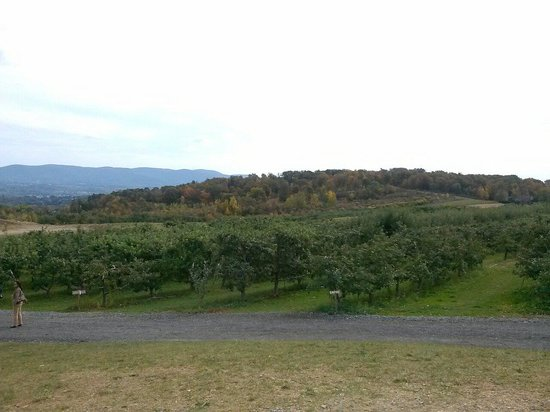 Lawrence Farms Orchards: Orchards