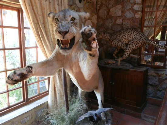 The Farm Inn: one of the previous resident lions