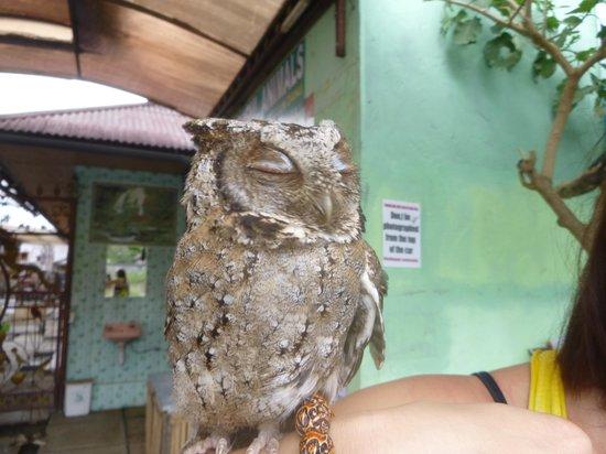Ulun Danu Temple: Owl