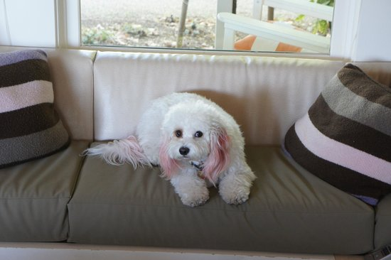 Carneros Resort and Spa : This place is for the dogs!