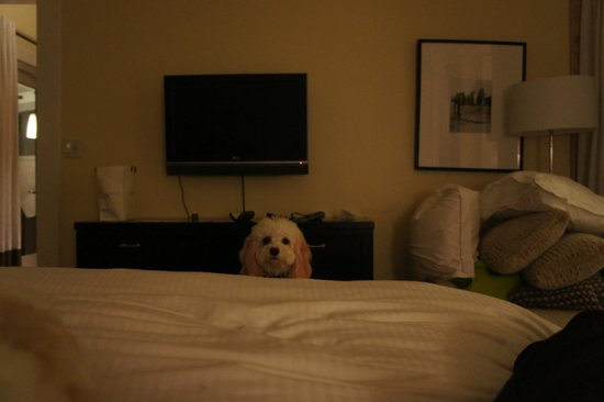 Carneros Resort and Spa : My dog was not allowed on my bed