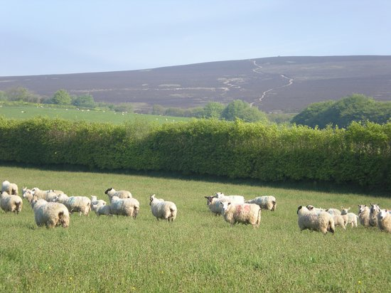 View of Dunkery Beacon from Combeshead farm B&B on Exmoor