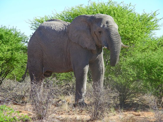 Okambara Elephant Lodge: Elefant