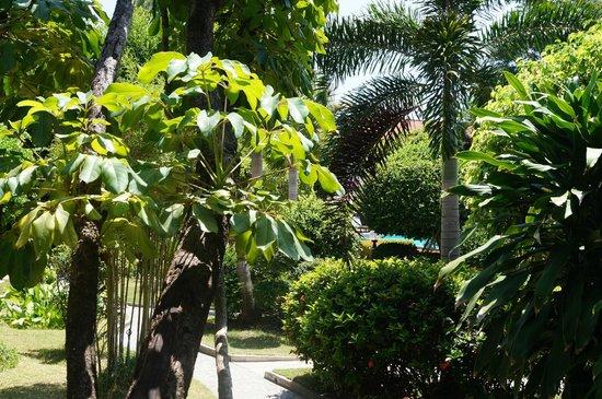 Sunshine Garden Resort: вид с балкона номера на 1 этаже (правый корпус)